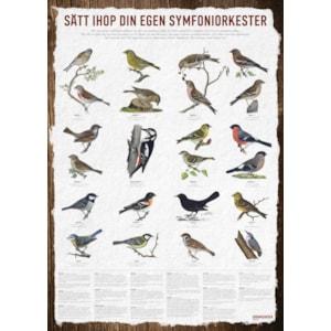Affisch Vildfågel, 50 x 70 cm