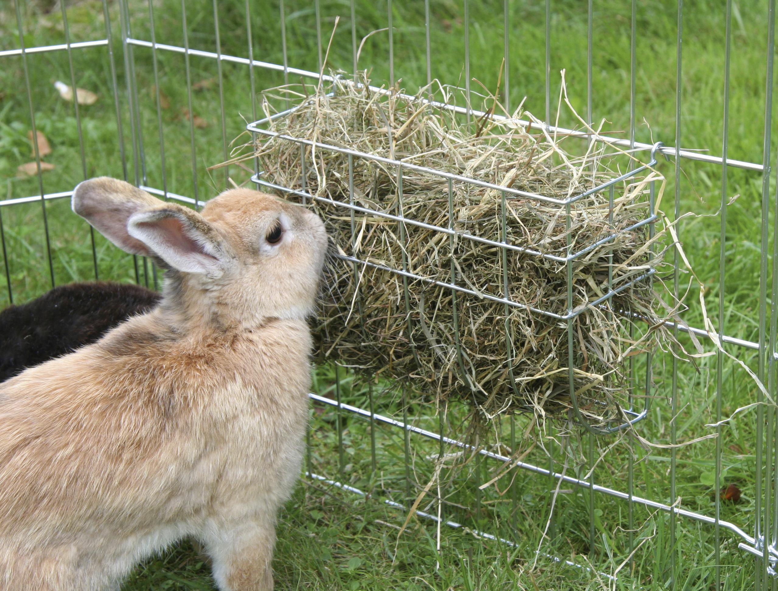 Höhäck till kanin