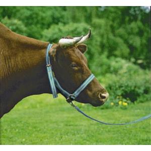 Grimma till ko