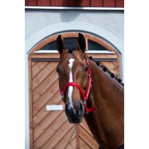 Grimma Fodrad, röd Pony