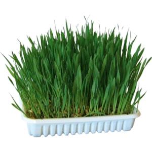 Fröpåse Kattgräs, 100 g